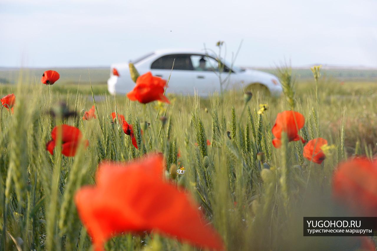 Маковое поле в Крыму