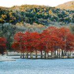 Озеро Сукко, Анапа — Кипарисовое озеро