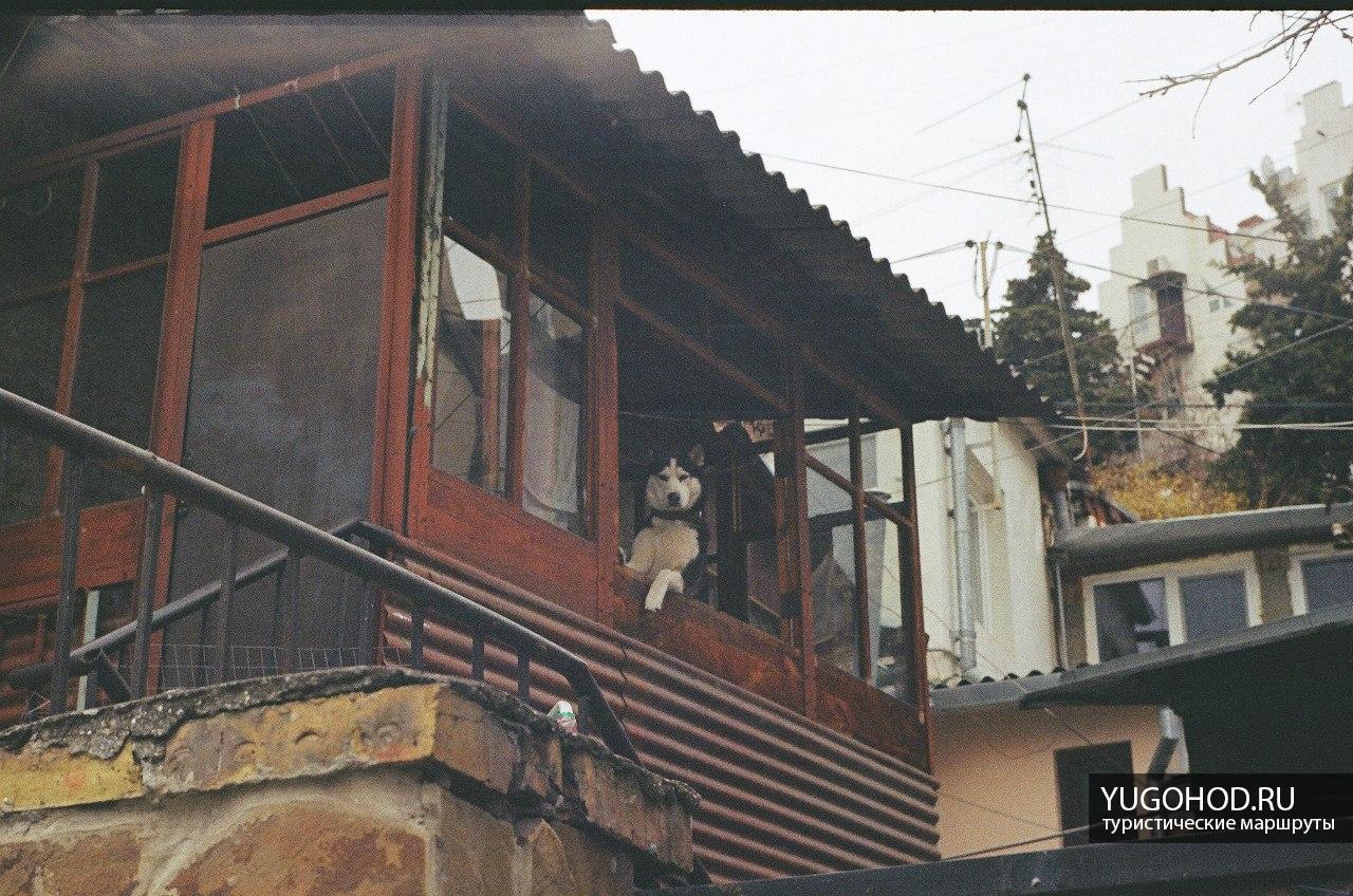 Улицы Ялты, пёс смотрит из окна