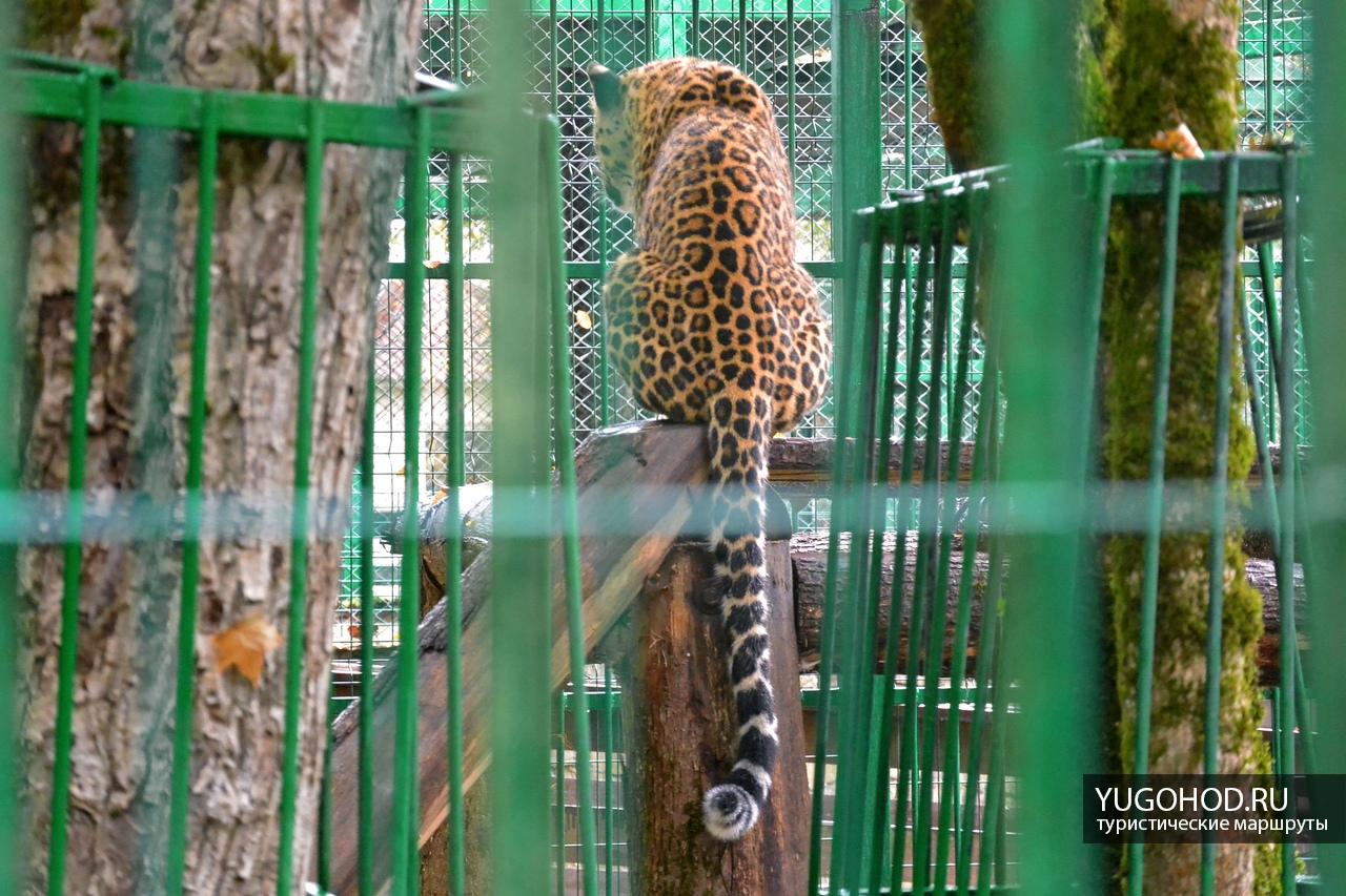 Леопард Скиф