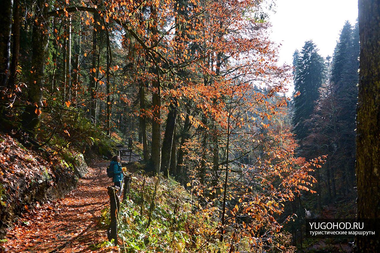 лес в парке Менделиха