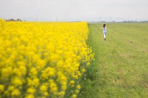 Рапсовое поле Учхоз Кубань